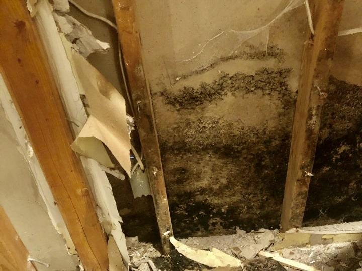 mold damage suffolk county